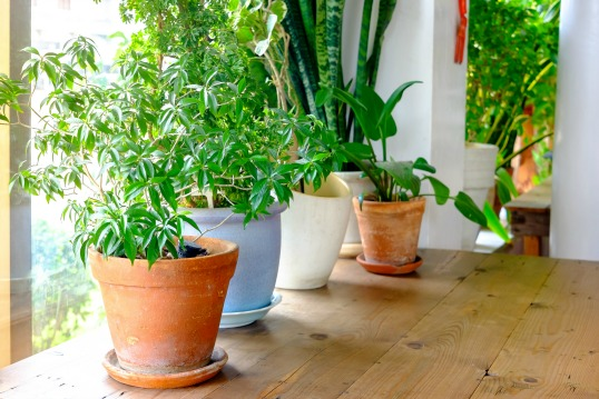 7 Indoor Plants To Green Up Your Home